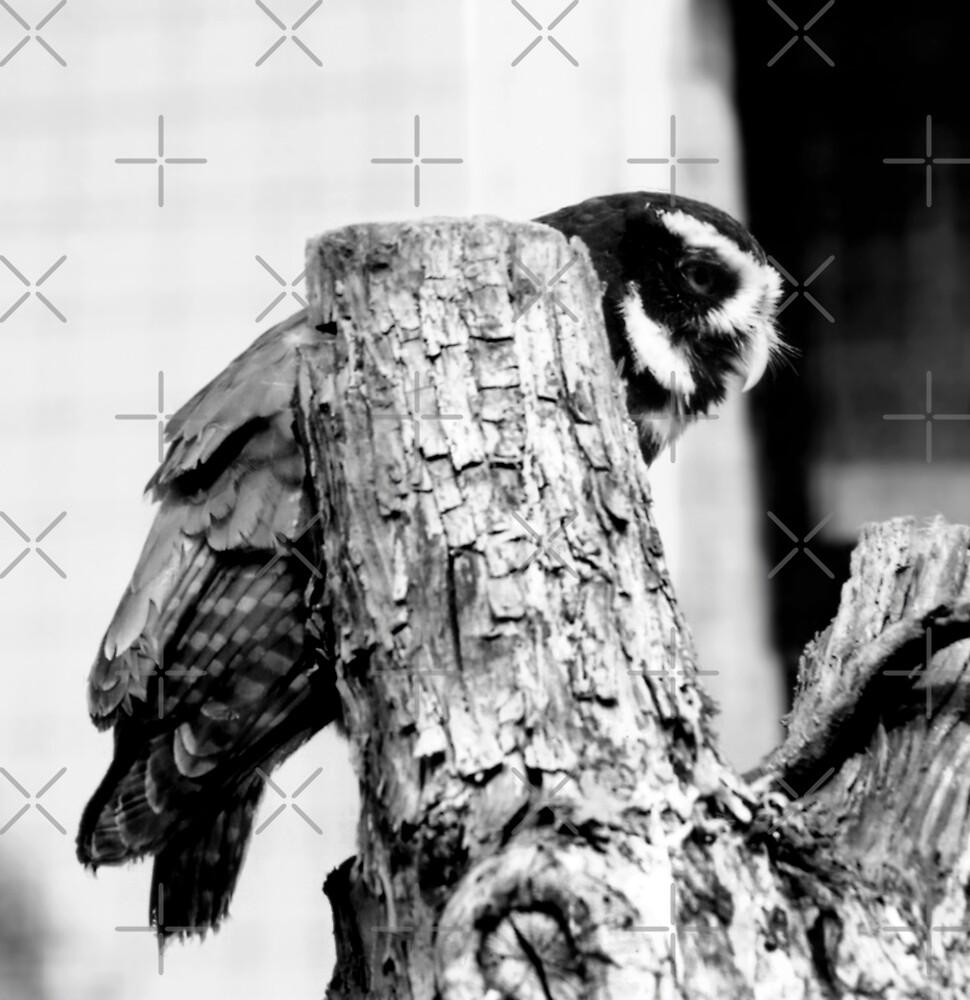 Great Big Owl by stellaozza
