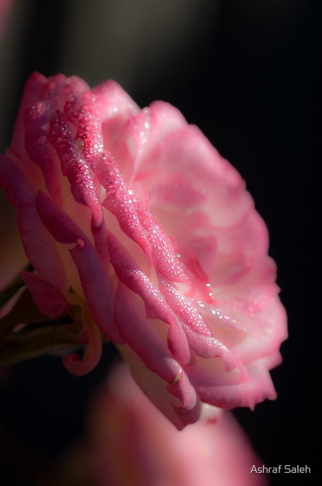 Soft Pink by Ashraf Saleh