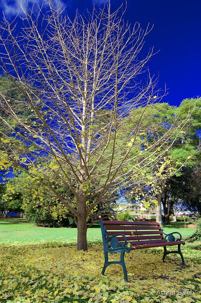 Walk in the park by Ashraf Saleh