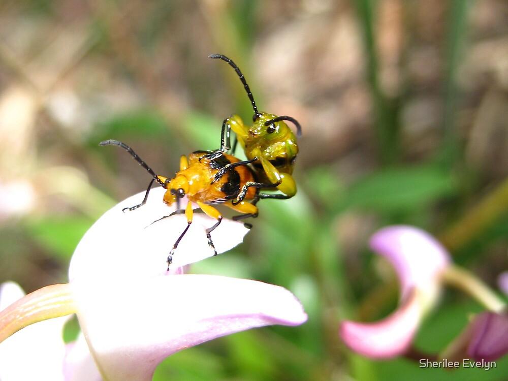 Bonking Beetles by Sherilee Evelyn