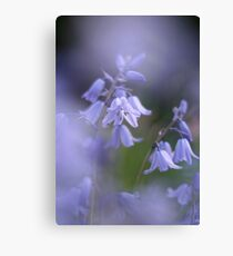 In a sea of blue Canvas Print