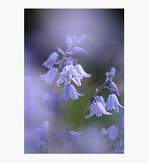 In a sea of blue Photographic Print