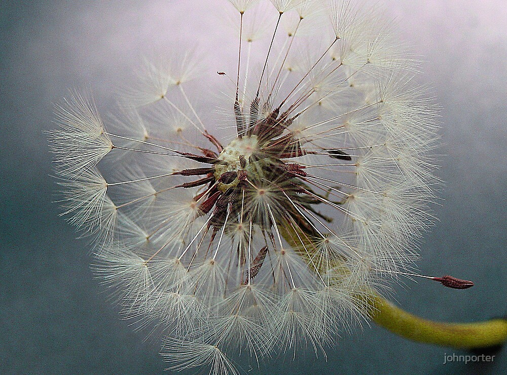 Just dandy by johnporter