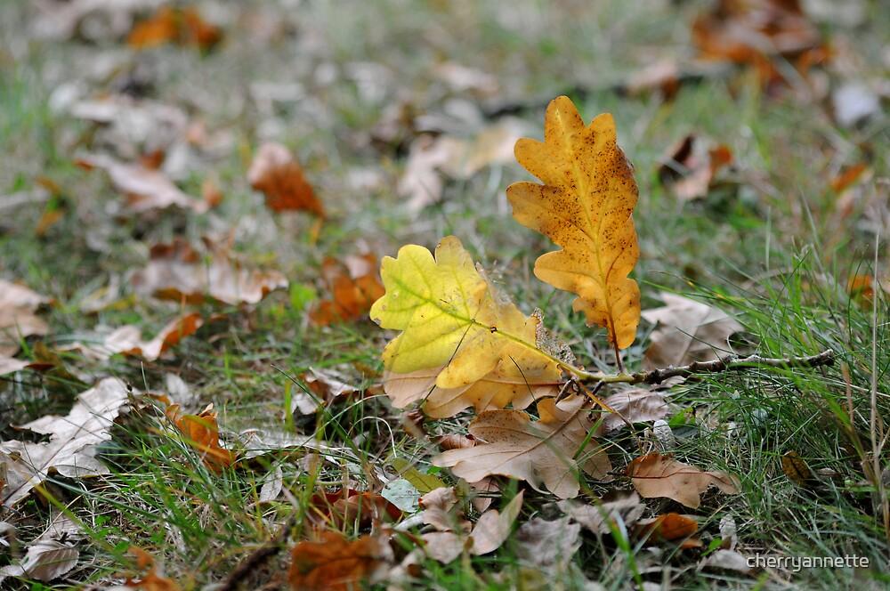 Autumn by cherryannette