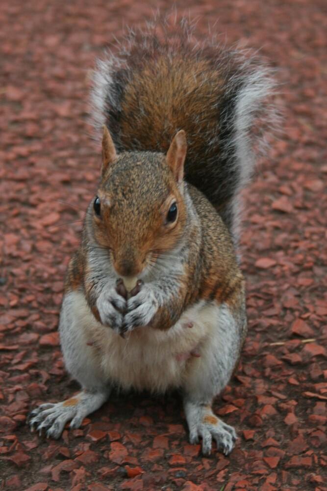 Squirrel At Royal Botanic Gardens, Edinburgh by Tasha  Blackmore