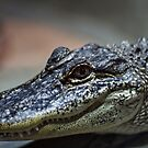 Animal Portrait - Alligator by Wolf Sverak