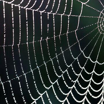 Web Design by cuprum