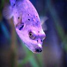 Animal Portrait - Pufferfish by Wolf Sverak
