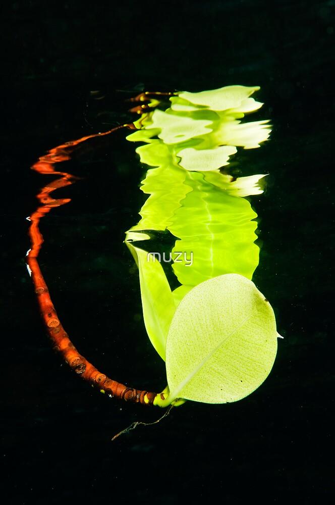 Leaf Reflection by muzy