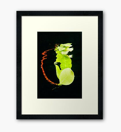 Leaf Reflection Framed Print