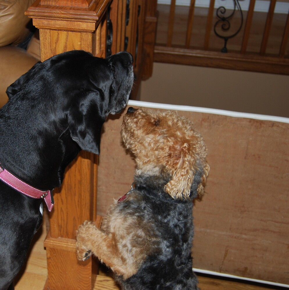 Just One Little Kiss!! by Tucker The Dog