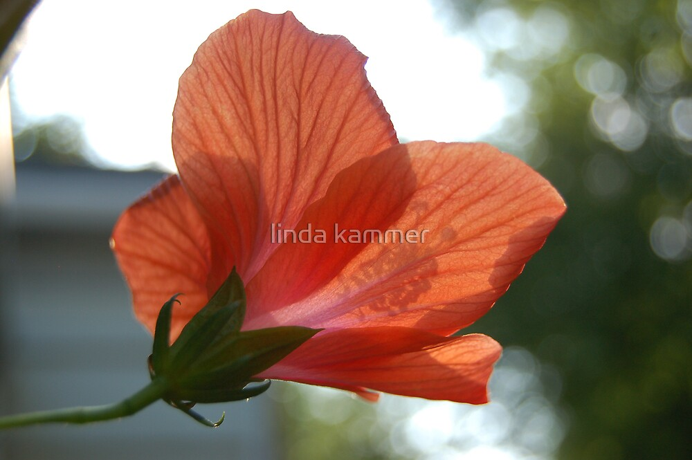 Afternoon Delight by linda kammer