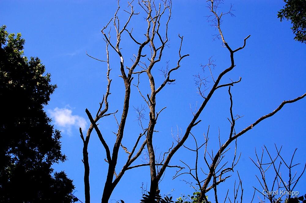 Branches by Carol Knepp