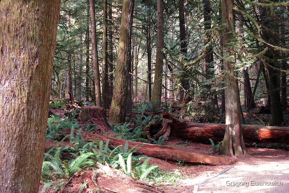 Cathedral Grove by Gregory Ewanowich