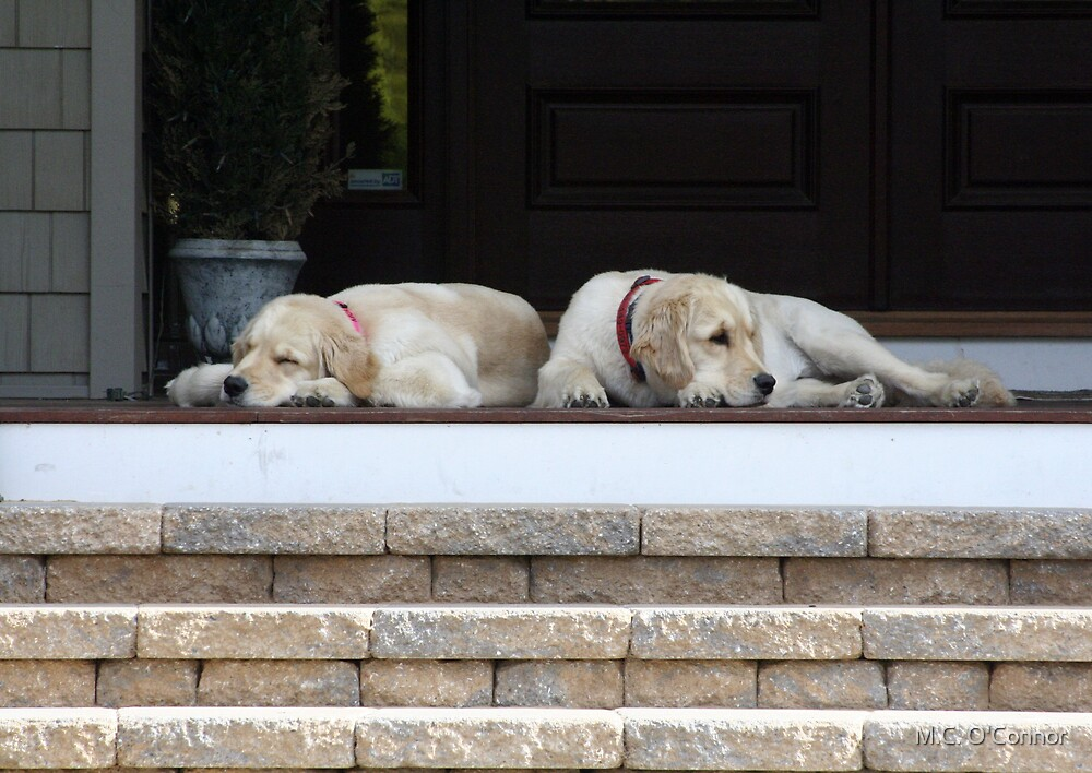 Nap Time by M.C. O'Connor