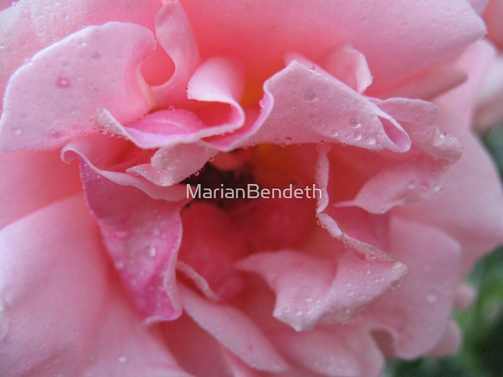 Pristine Pink Rose by MarianBendeth