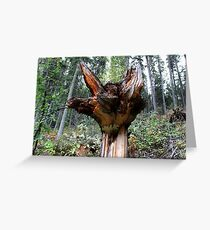 A Downer - Tree Stump In Forrest  Greeting Card