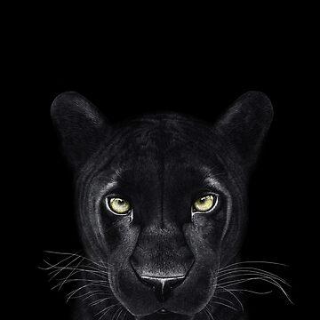 Black panther on black by kodamorkovkart