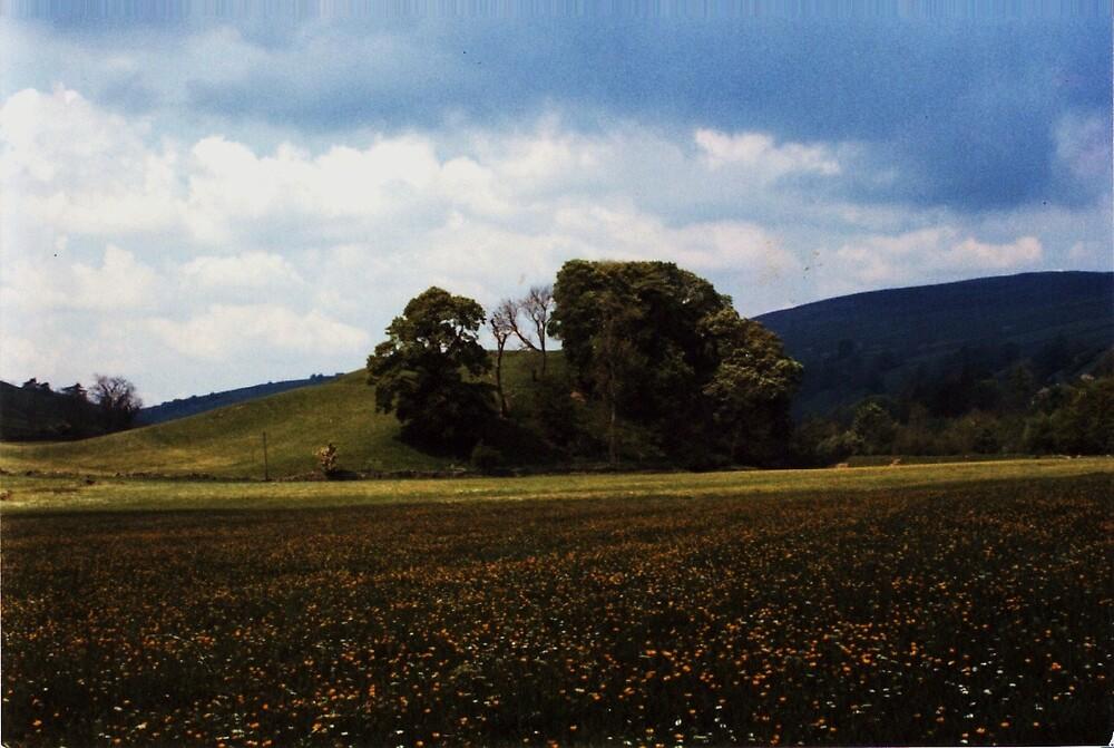 wildflowers in a meadow by charliethetramp