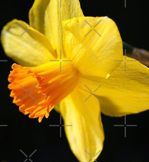 Sunny Yellows Of Daffodil by Joy Watson