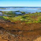 Rickett's Point Panorama by Roz McQuillan