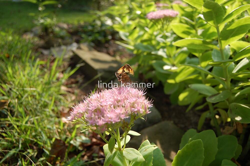 fluttering by linda kammer
