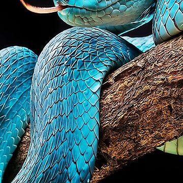 Blue Snake, Snake Owner by EarthlyIndigo