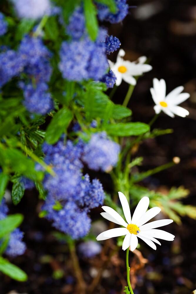 Summer, Flower by Chen Sun