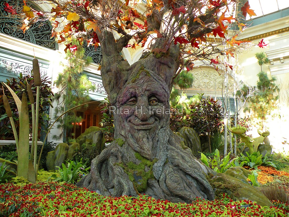Talking tree.... by Rita  H. Ireland