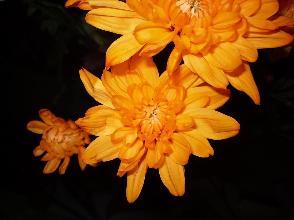 Orange Stars by rhian mountjoy