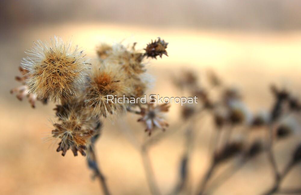 Weeds by Richard Skoropat