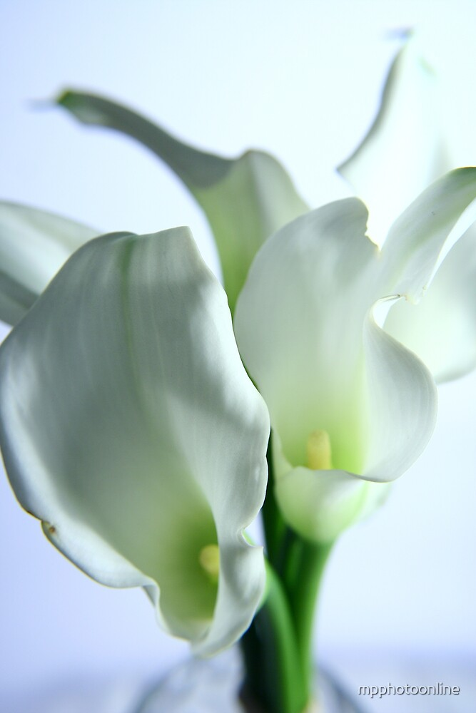 Lilies in a vase - Color version by mpphotoonline