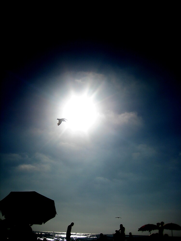 Seagull in Sky, Tanning POV by SamLowry