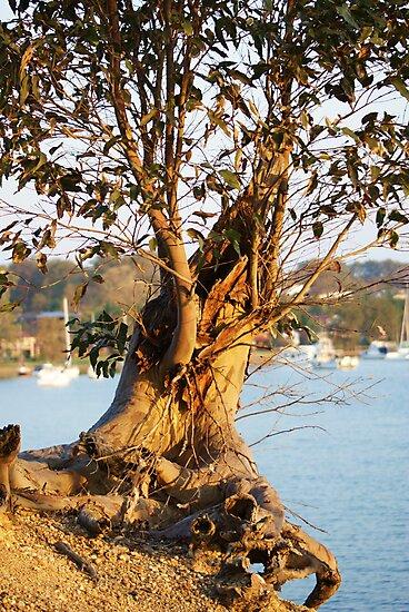Lone Eucalyptus Tree by Rochelle Buckley