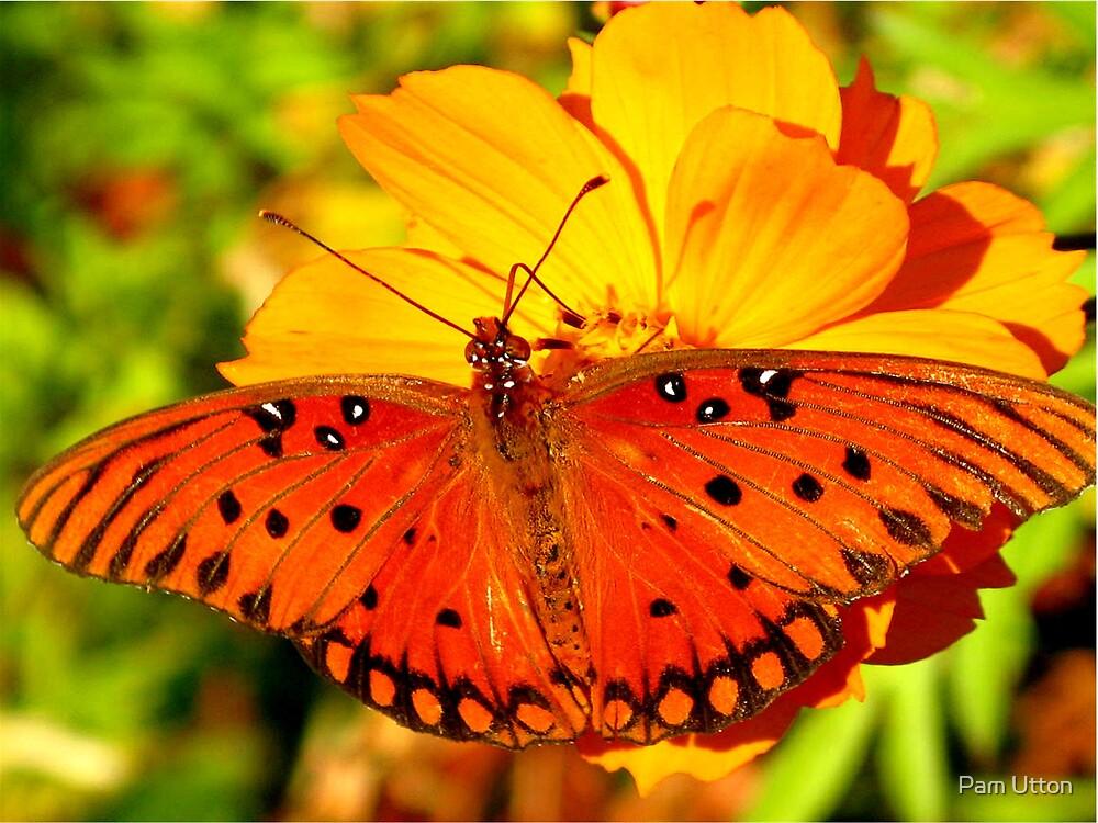 orange beauty by Pam Utton