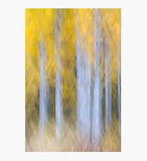 Aspen Abstraction Photographic Print
