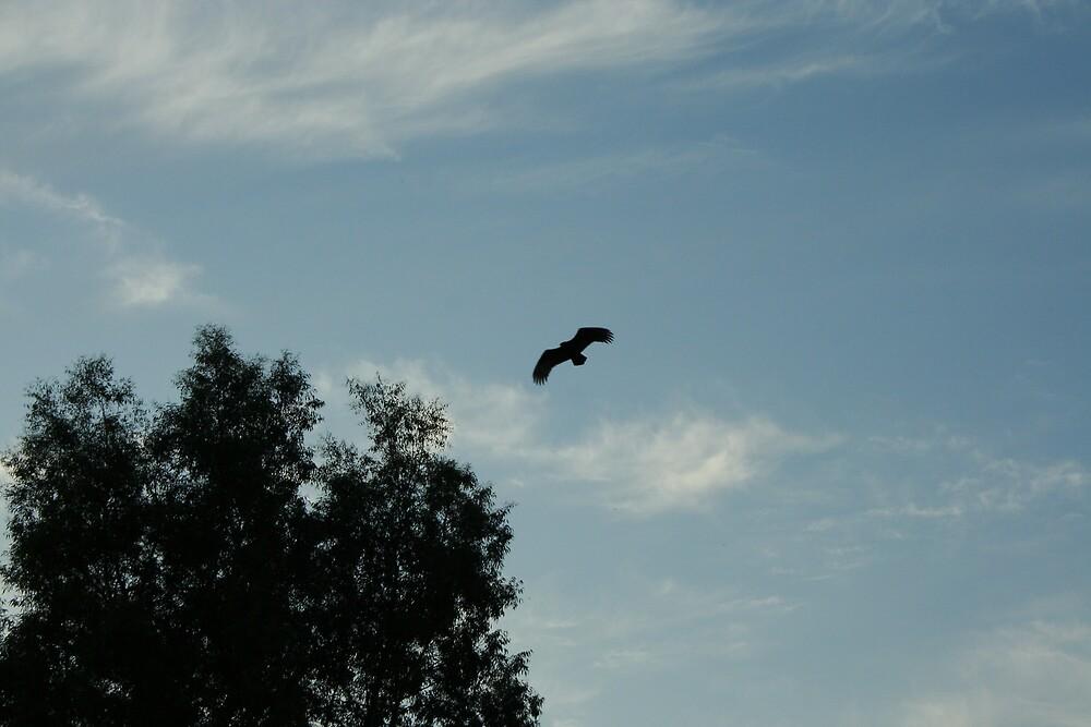 Flying Hawk... by natgirl73