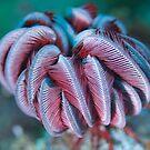 Starfish Rose by Rick Grundy
