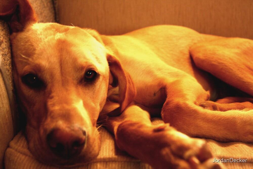 Chill pup by JordanDecker