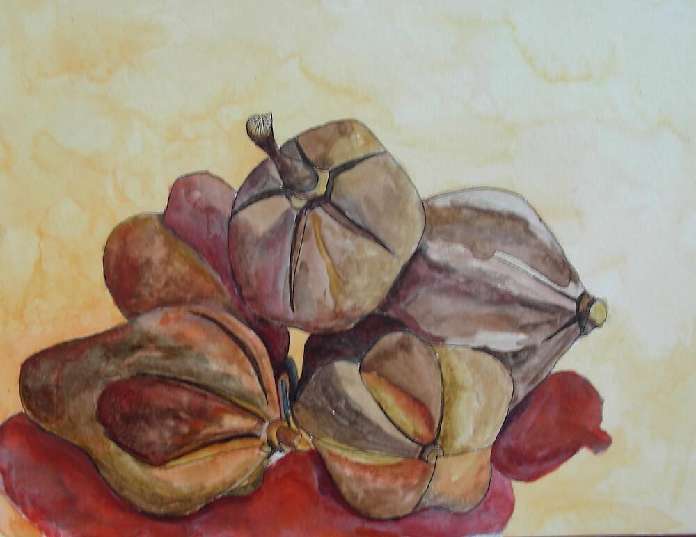 Mahogany nuts, Barbados by Phyllis Dixon