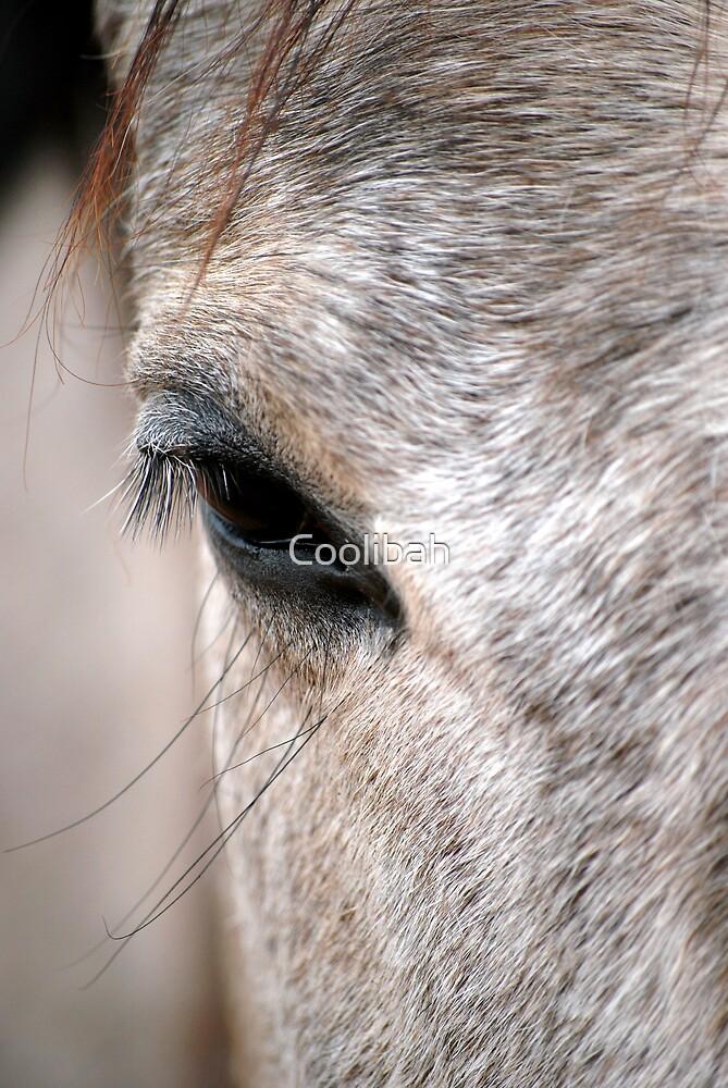 Eye by Coolibah