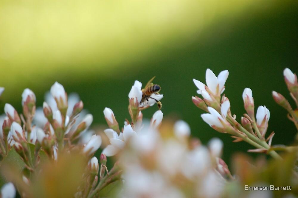 courious bee by EmersonBarrett