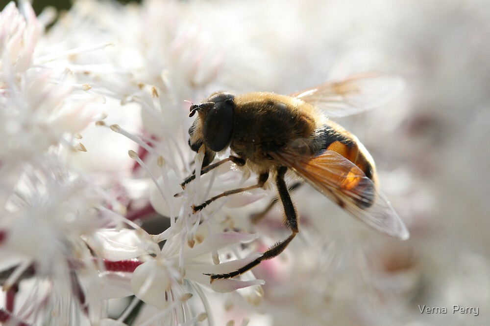 Bee on flower by Verna  Perry
