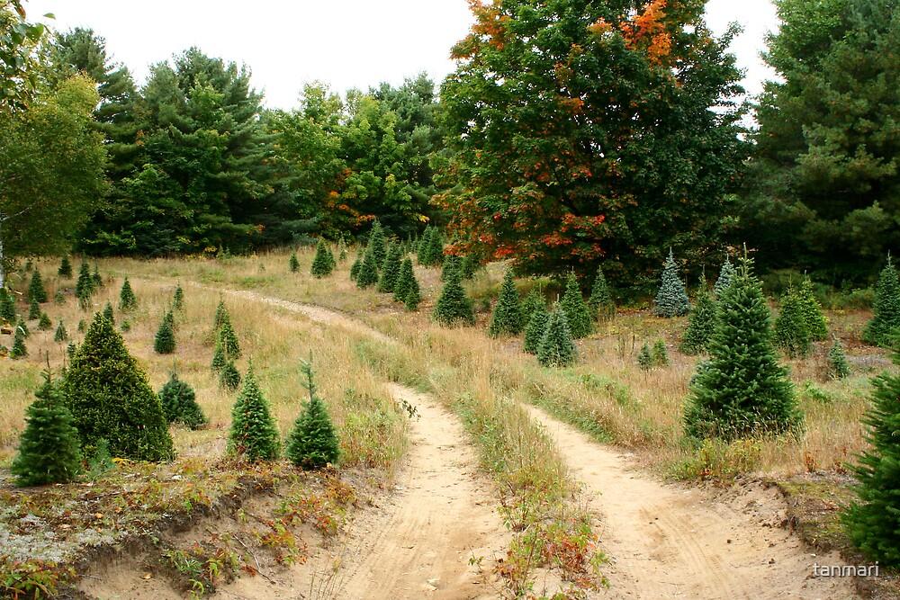 Christmas trees by tanmari