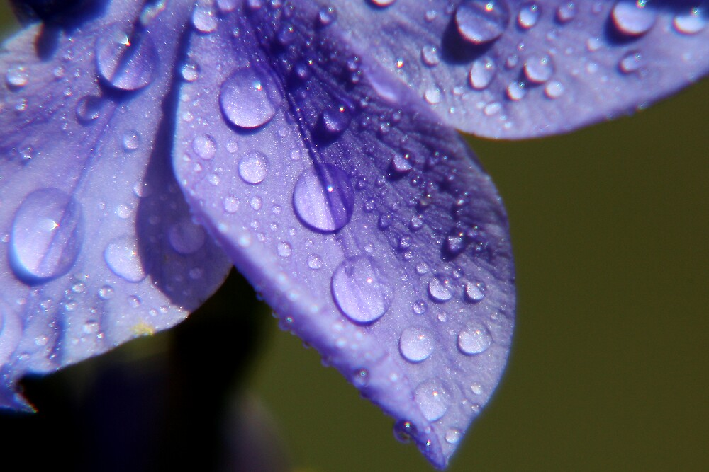 Purple Water Droplets by Yanni