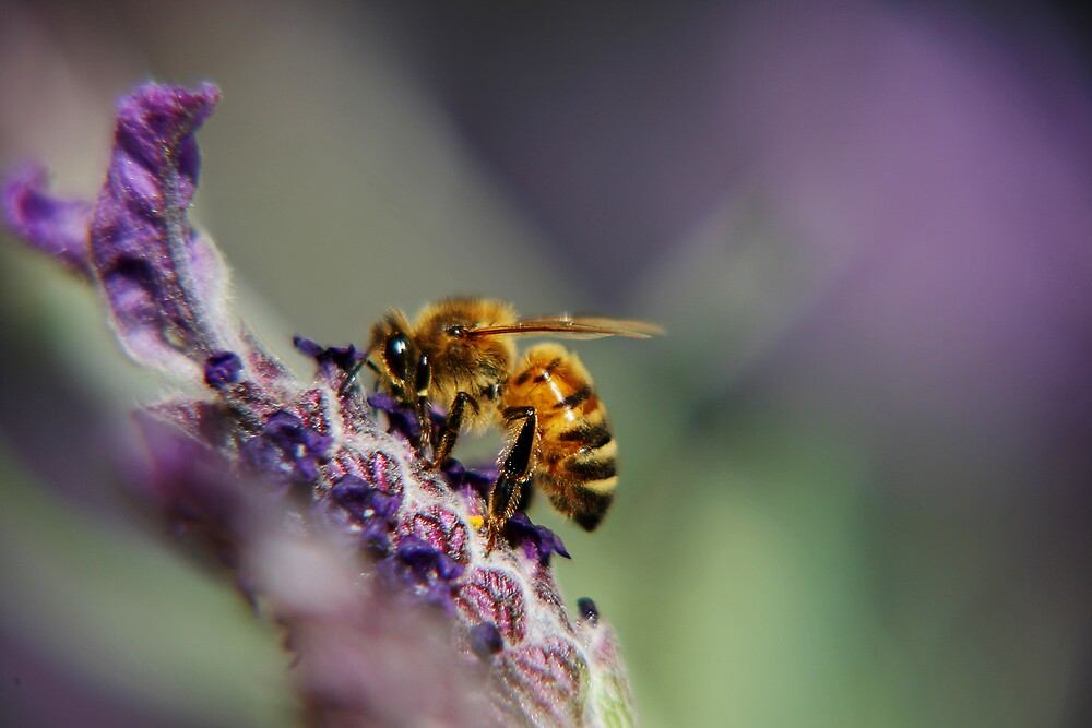 Bee06 by Yanni