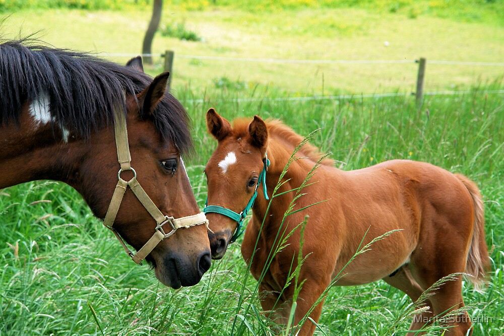 Close encounter of the horse-kind by Marita Sutherlin