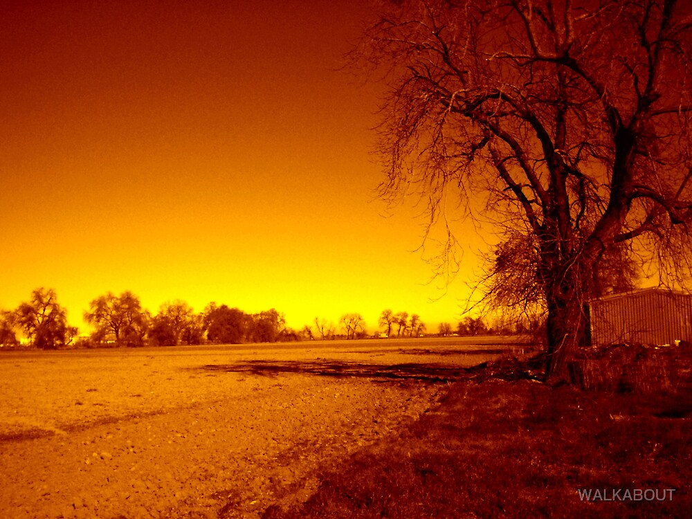 tree and field by WALKABOUT