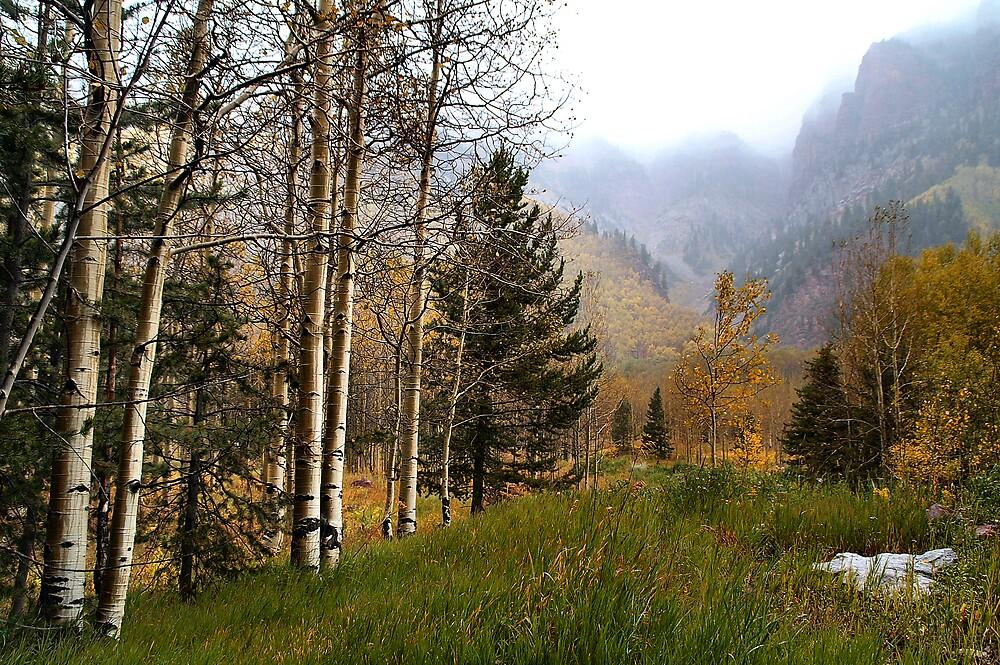 Misty Mountain Meadow of Aspens near Sievers Mountain by Robert W. Spath II