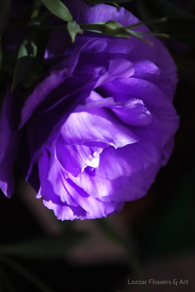 Soft lithianthus mystery.  by Lozzar Flowers & Art